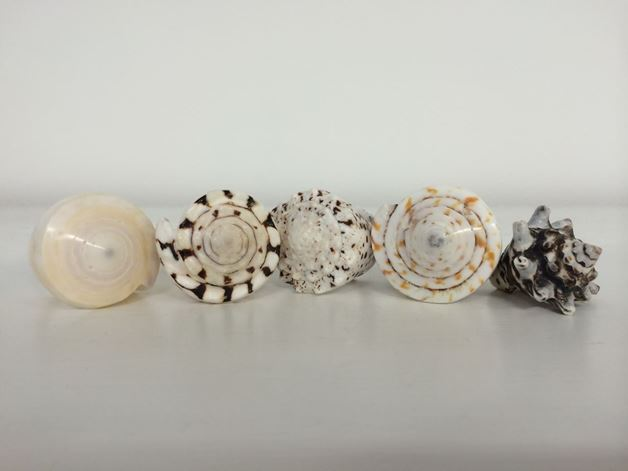 Picture for category Shell rings